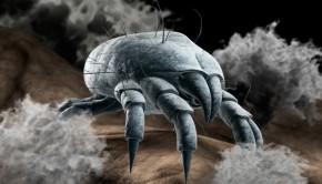 alergia na roztocza